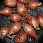 ty_segall_fried_shallots.png